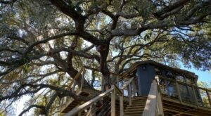 Spend The Night Stargazing In A Treehouse Near St. Cloud, Florida