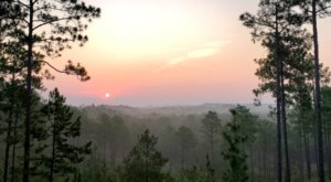 There's Nothing Quite As Magical As The Panoramic Treetop Views You'll Find At The Longleaf Vista Recreational In Louisiana
