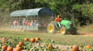The Fall Festival At Lazy Acres In Mississippi Is A Classic Fall Tradition