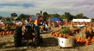 The Ferrari Farms Fall Festival In Nevada Is A Classic Fall Tradition