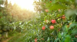 Nothing Says Fall Is Here More Than A Visit To Colorado's Charming Apple Farm