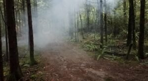 This Spooky Season, Washington's Haunted Forest Will Chill You To The Bone