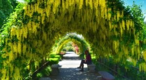 There's Nothing Quite As Magical As The Tunnel Of Trees You'll Find At Bayview Farm And Garden In Washington