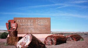 Petrified Forest National Park Is A Unique Dog-Friendly Destination In Arizona Perfect For An Outdoor Adventure