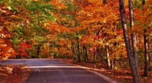 Hardin Ridge Trail Is One Of The Best Hikes In Indiana For Leaf-Peepers