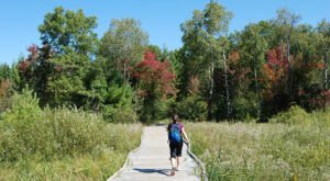 The Unique Moses Creek Trail is a Wisconsin Boardwalk Trail That's Beyond Beautiful