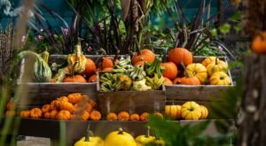 Find Your Next Jack-O-Lantern At One Of These 7 Rhode Island Pumpkin Patches