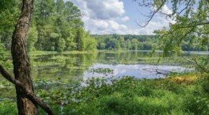 Discover A Pristine Paradise When You Visit Illinois' Lake Glendale