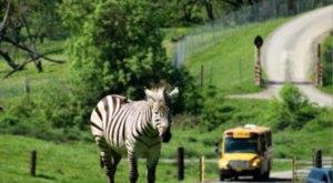 There's A Wildlife Safari Park Hiding In Winston, Oregon