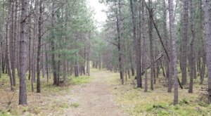 The Corsail Trail Network In Michigan Is A Whimsical Place To Hike, Ski, And Stroll