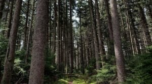 There's Nothing Quite As Magical As The Tunnel Of Trees You'll Find On Red Spruce Knob In West Virginia