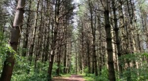 There's Nothing Quite As Magical As The Tunnel Of Trees You'll Find At Wildcat Den In Iowa