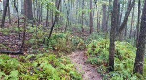 Cartecay River Loop In Georgia Was One Of The First Mountain Biking Trails In The State – And It's Still A Rugged Ride