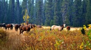 Take A Fall Foliage Trail Ride On Horseback With Deadwood Outfitters In Idaho