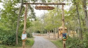 Marty's Mythical Woods Is A Magical Playground In Maryland Unlike Any Other