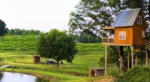 Drink And Be Merry And Then Spend The Night In Your Own Treehouse At Treehouse Vineyards In North Carolina