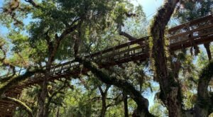 Spend The Day Exploring The Swinging Bridge Canopy Walkway In Florida