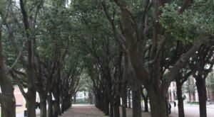There's Nothing Quite As Magical As The Tunnel Of Trees You'll Find At Gerald D. Hines Waterwall Park In Texas