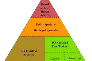 How to Get An Arborist Certification
