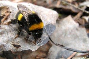 Cómo detener la picazón que causan las picaduras de abeja