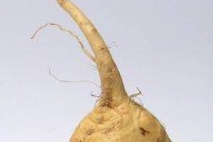 What Are the Benefits of Maca Root for Women?