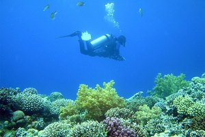 Why Are Coral Reefs Important?