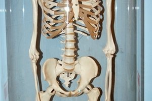 Experiments for Kids on the Skeletal System