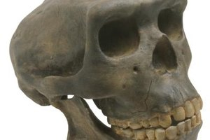 Differences Between Archaeology & Forensic Anthropology