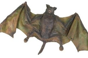 Activities for Kids About Bats and Echolocation