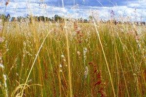 Grassland Soil Types