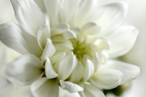 Vietnamese Funeral Flower Customs