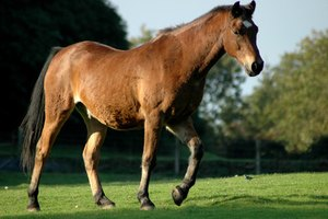 Top Equine Veterinary Colleges