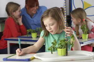 1st Grade Lesson on the Parts of a Plant