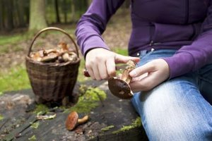 Wild Mushroom Hunting in Oregon