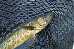 Minnesota Top Five Fishing Lakes