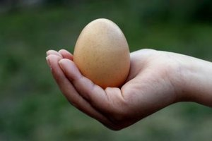How to Take Care of an Egg Baby Project