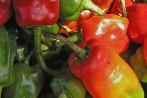 Guía de información nutricional de las fajitas