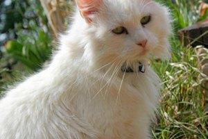 Sobre la desparasitación en gatitos