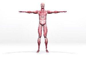 Síntomas de desgarro muscular