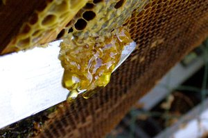 How to Get Honey Out of a Honeycomb