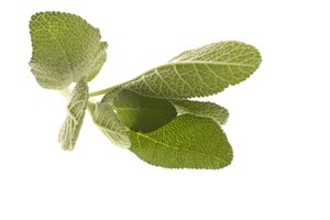 ¿Cuáles son los beneficios para la salud del té de salvia?