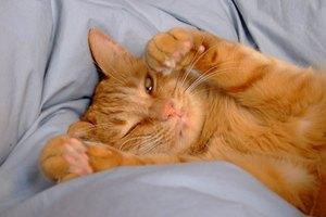 Cómo diagnosticar orina espumosa en un gato