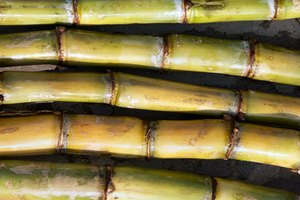 How to Extract Molasses From Sugar Cane