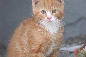 Sobre la hemorragia rectal en los gatos