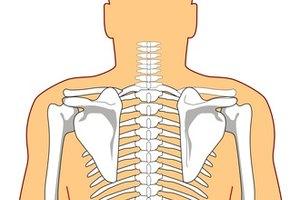 ¿Qué es la musculatura paravertebral de la columna torácica?