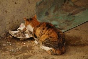 Las enfermedades que causan que un gato pierda el apetito