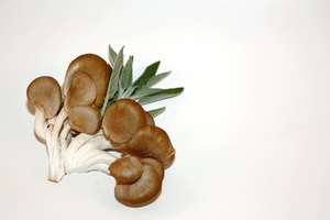 How to Tell When Oyster Mushrooms Go Bad