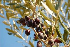 Valor nutricional de las aceitunas negras