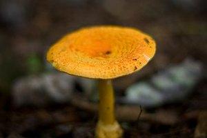 Los efectos de los hongos