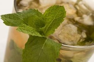 Mint adds a refreshing, cool flavor to a variety of drinks.